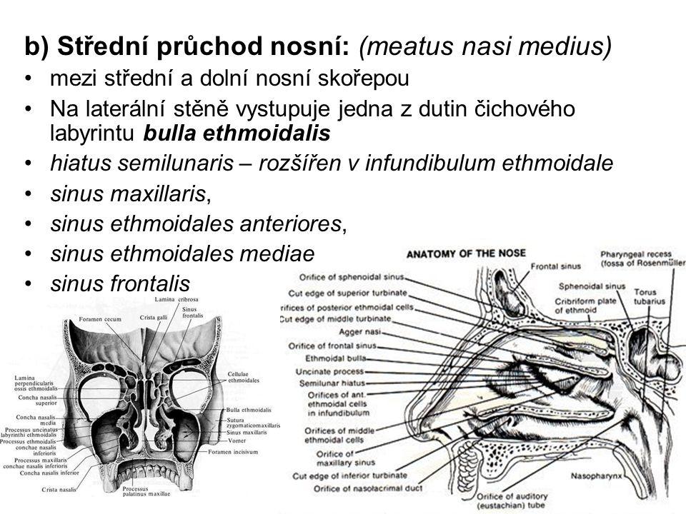 b) Střední průchod nosní: (meatus nasi medius) mezi střední a dolní nosní skořepou Na laterální stěně vystupuje jedna z dutin čichového labyrintu bulla ethmoidalis hiatus semilunaris – rozšířen v infundibulum ethmoidale sinus maxillaris, sinus ethmoidales anteriores, sinus ethmoidales mediae sinus frontalis