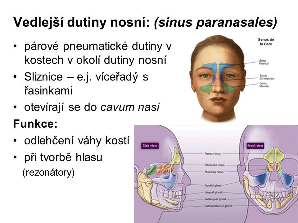 Vedlejší dutiny nosní: (sinus paranasales) párové pneumatické dutiny v kostech v okolí dutiny nosní Sliznice – e.j.