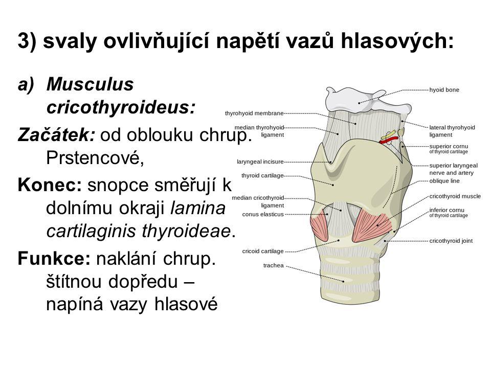 3) svaly ovlivňující napětí vazů hlasových: a)Musculus cricothyroideus: Začátek: od oblouku chrup.