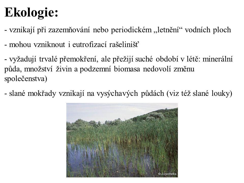 """Ekologie: - vznikají při zazemňování nebo periodickém """"letnění"""" vodních ploch - mohou vzniknout i eutrofizací rašelinišť - vyžadují trvalé přemokření,"""