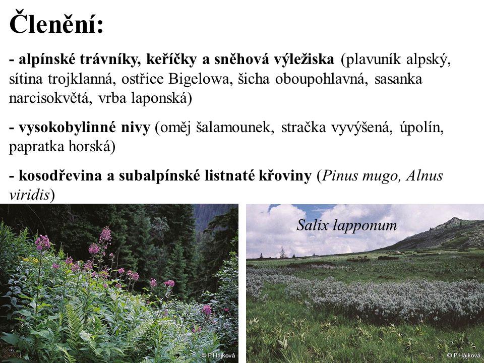 Členění: - alpínské trávníky, keříčky a sněhová výležiska (plavuník alpský, sítina trojklanná, ostřice Bigelowa, šicha oboupohlavná, sasanka narcisokv
