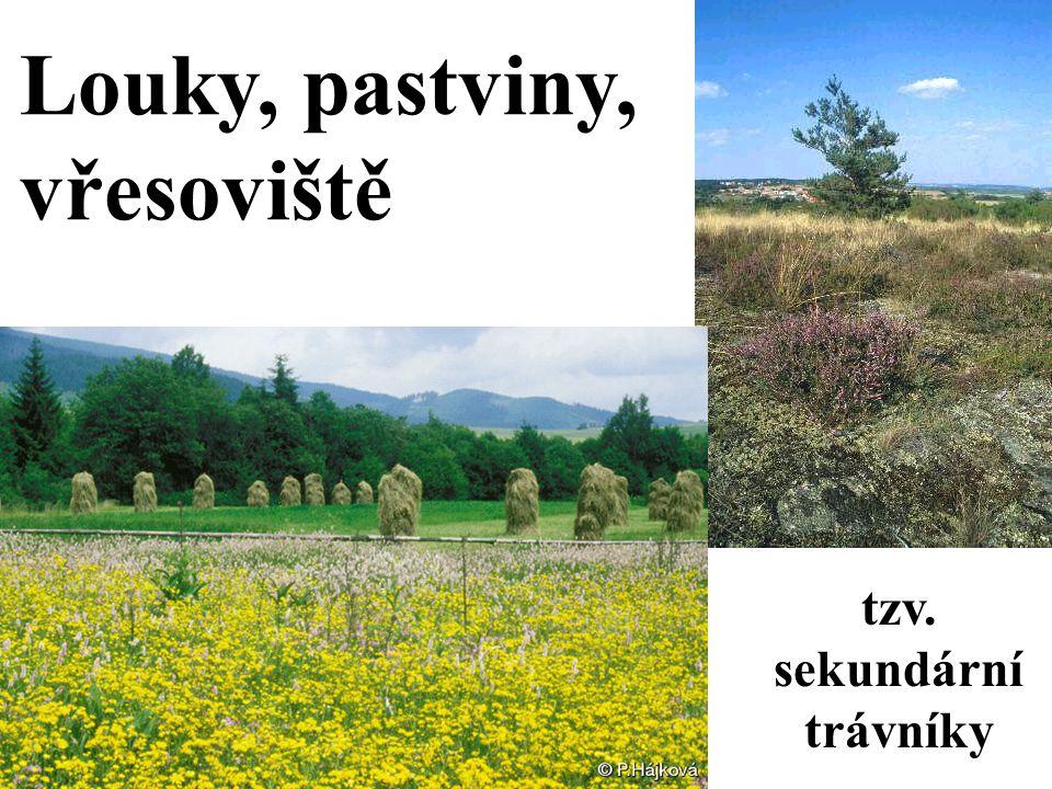 Louky, pastviny, vřesoviště tzv. sekundární trávníky