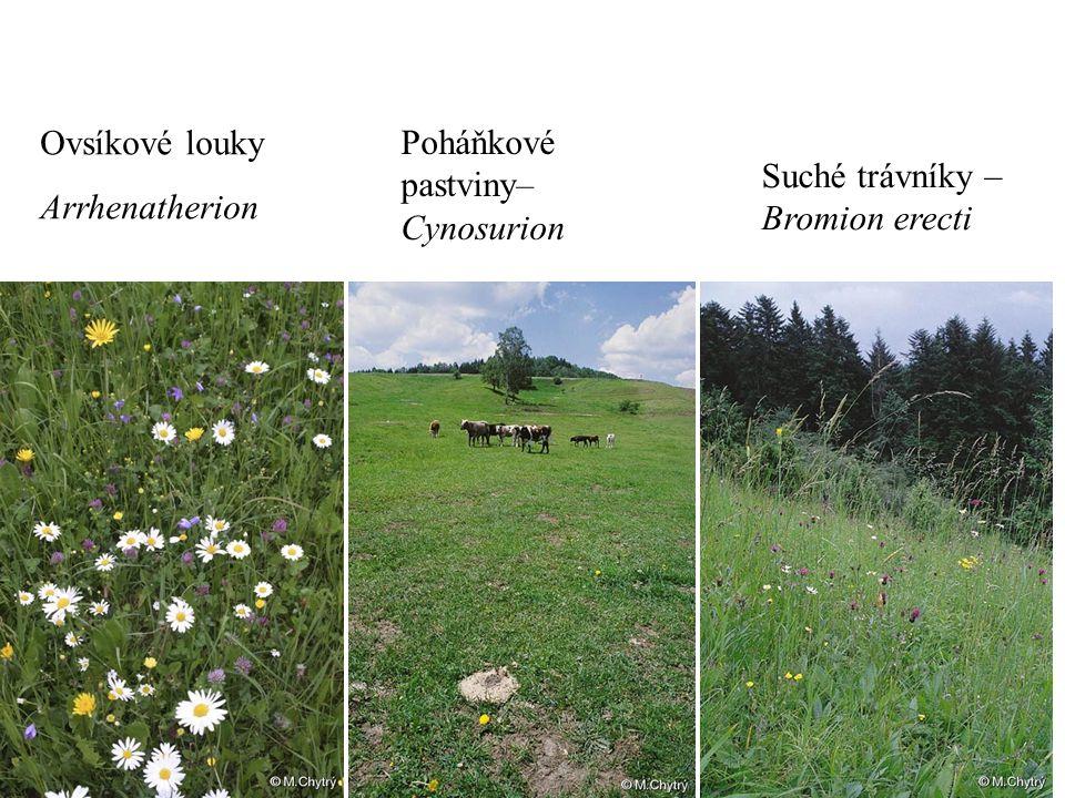 Ovsíkové louky Arrhenatherion Suché trávníky – Bromion erecti Poháňkové pastviny– Cynosurion