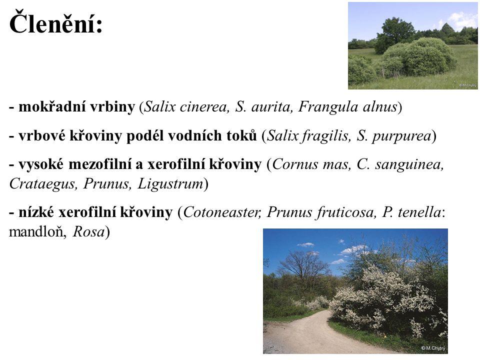Členění: - mokřadní vrbiny ( Salix cinerea, S. aurita, Frangula alnus ) - vrbové křoviny podél vodních toků (Salix fragilis, S. purpurea) - vysoké mez