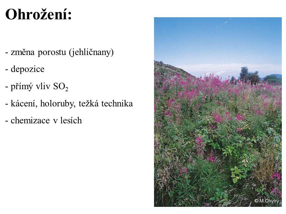 Ohrožení: - změna porostu (jehličnany) - depozice - přímý vliv SO 2 - kácení, holoruby, težká technika - chemizace v lesích