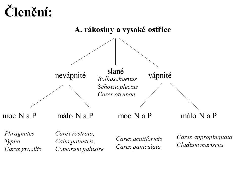 Členění: A. rákosiny a vysoké ostřice nevápnitévápnité moc N a P málo N a P Carex rostrata, Calla palustris, Comarum palustre Carex appropinquata Clad