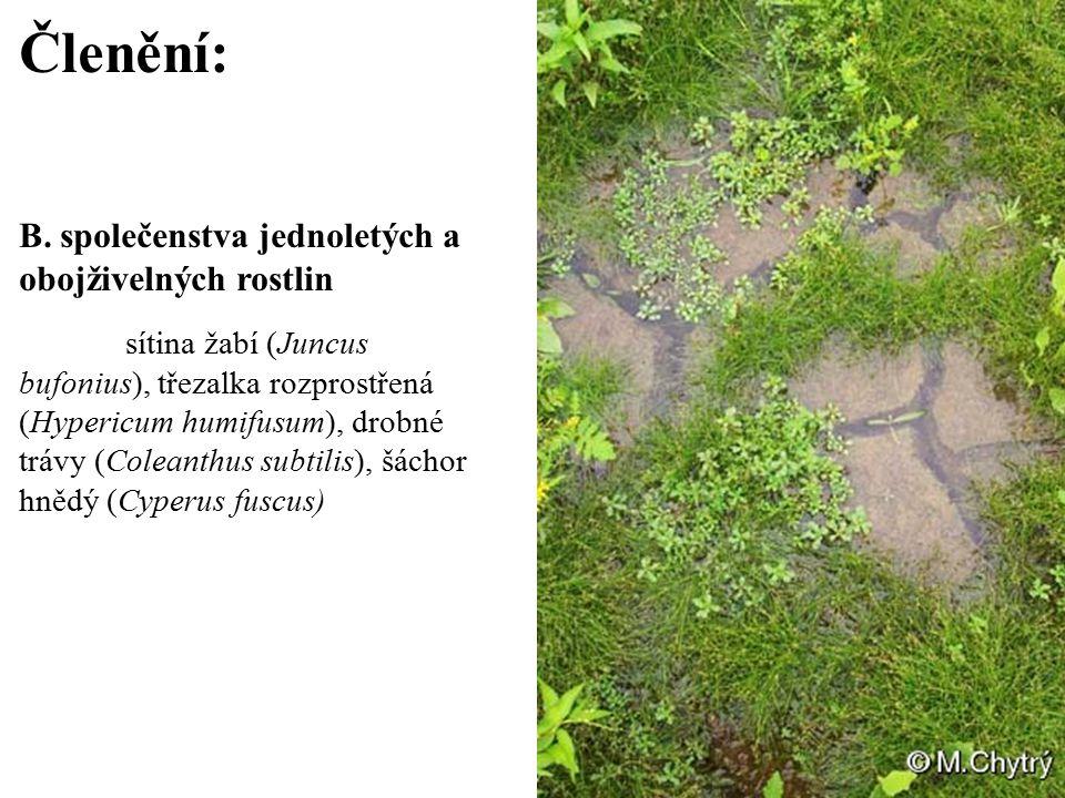 Členění: B. společenstva jednoletých a obojživelných rostlin sítina žabí (Juncus bufonius), třezalka rozprostřená (Hypericum humifusum), drobné trávy