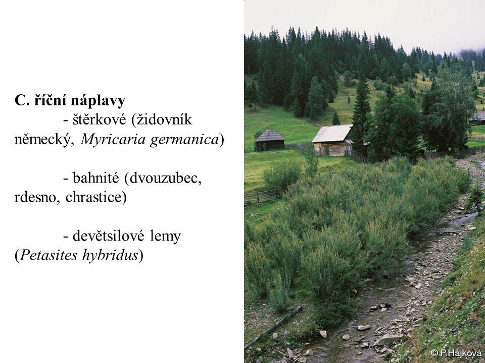 C. říční náplavy - štěrkové (židovník německý, Myricaria germanica) - bahnité (dvouzubec, rdesno, chrastice) - devětsilové lemy (Petasites hybridus)