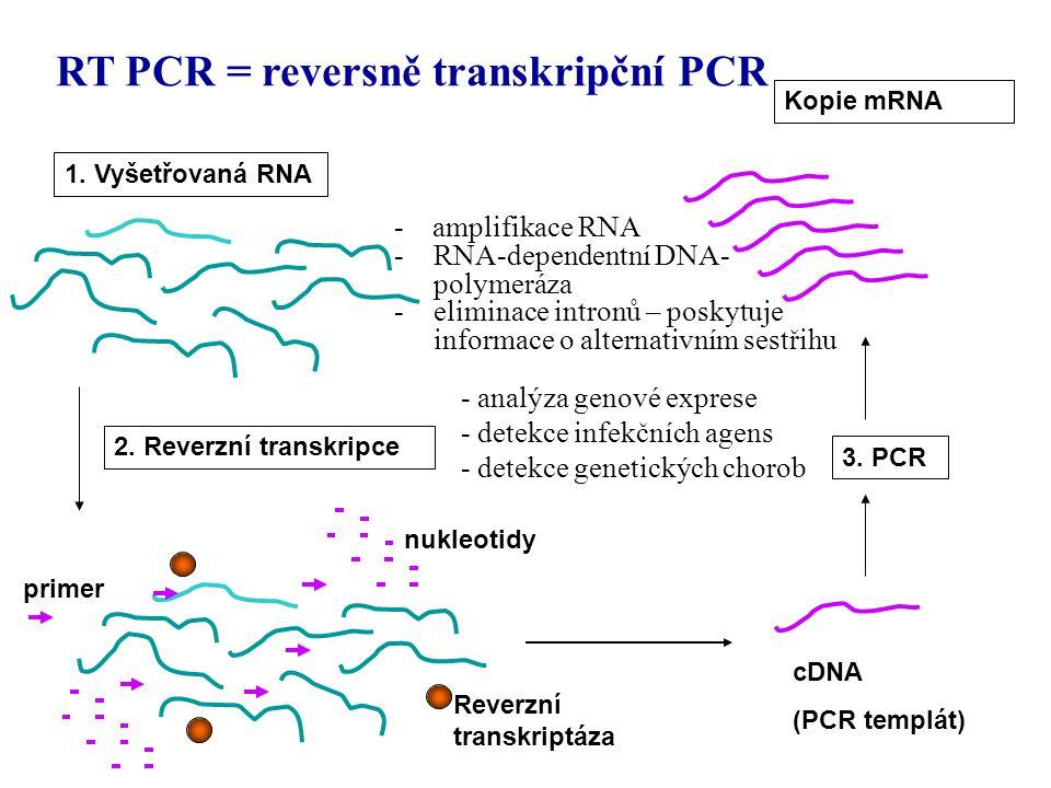 2. Reverzní transkripce cDNA (PCR templát) 3. PCR 1. Vyšetřovaná RNA nukleotidy primer Reverzní transkriptáza Kopie mRNA - analýza genové exprese - de