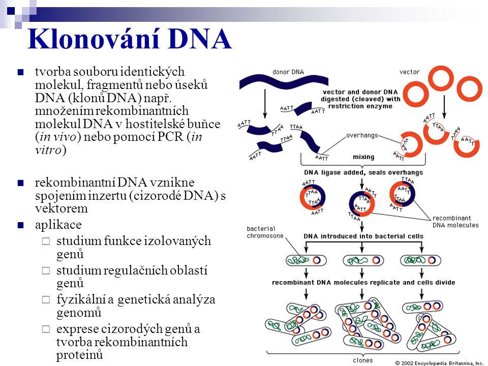 tvorba souboru identických molekul, fragmentů nebo úseků DNA (klonů DNA) např. množením rekombinantních molekul DNA v hostitelské buňce (in vivo) nebo