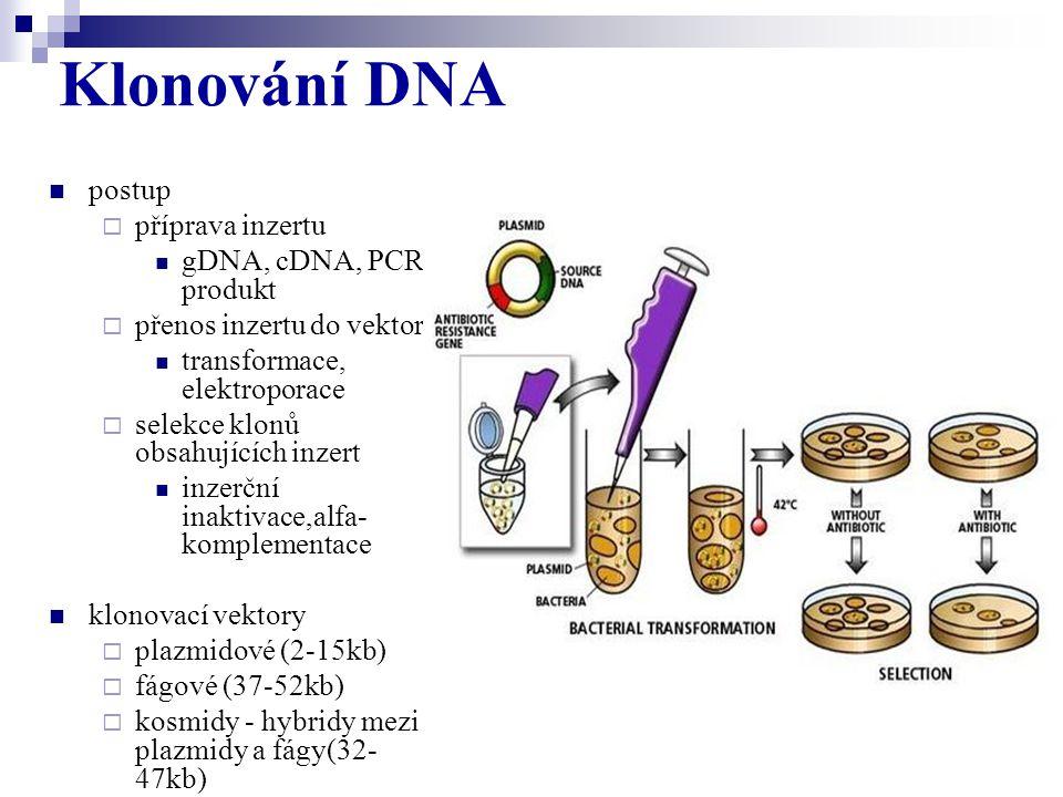postup  příprava inzertu gDNA, cDNA, PCR produkt  přenos inzertu do vektoru transformace, elektroporace  selekce klonů obsahujících inzert inzerční
