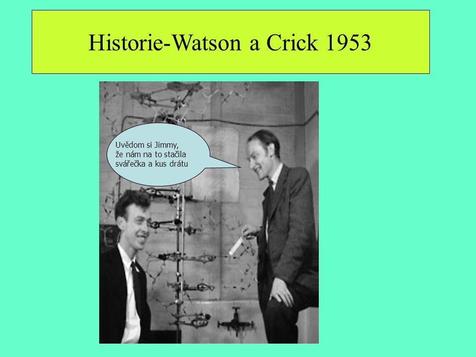 Uvědom si Jimmy, že nám na to stačila svářečka a kus drátu Historie-Watson a Crick 1953