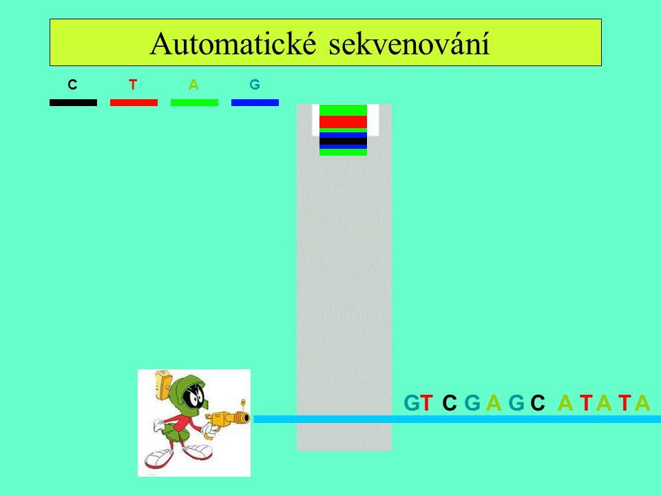 Sekvenácia II. ATGC GAGCATACTAGT Automatické sekvenování