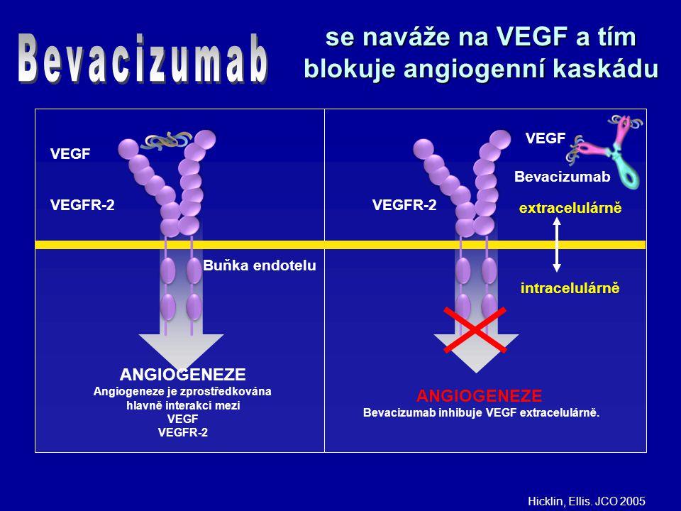 se naváže na VEGF a tím blokuje angiogenní kaskádu VEGF VEGFR-2 Buňka endotelu ANGIOGENEZE Angiogeneze je zprostředkována hlavně interakcí mezi VEGF VEGFR-2 VEGF VEGFR-2 ANGIOGENEZE Bevacizumab inhibuje VEGF extracelulárně.