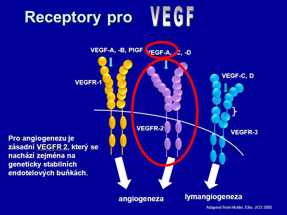 Receptory pro angiogeneza lymangiogeneza VEGF-A, -B, PlGF VEGFR-1 VEGFR-2 VEGF-A, -C, -D VEGFR-3 VEGF-C, D Adapted from Hicklin, Ellis. JCO 2005 VEGFR