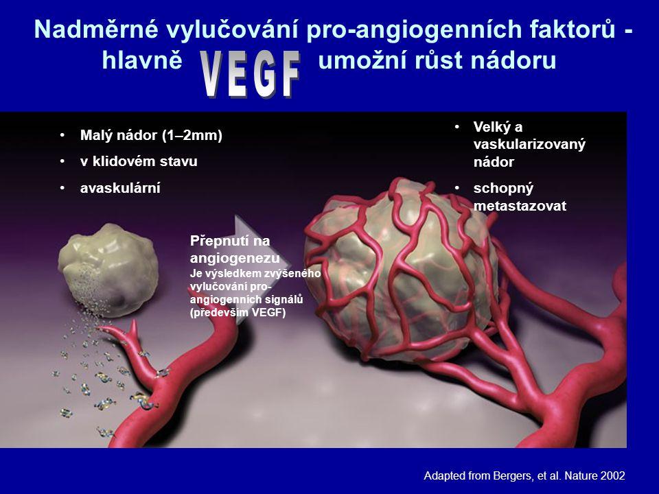 Velký a vaskularizovaný nádor schopný metastazovat Nadměrné vylučování pro-angiogenních faktorů - hlavně umožní růst nádoru Adapted from Bergers, et al.