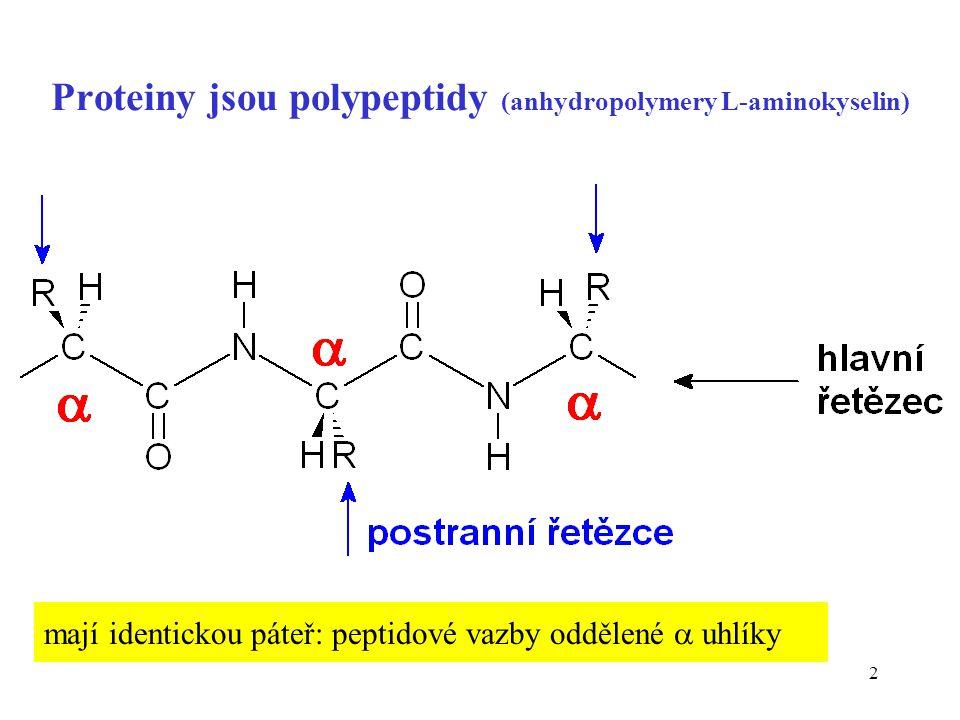 2 Proteiny jsou polypeptidy (anhydropolymery L-aminokyselin) mají identickou páteř: peptidové vazby oddělené  uhlíky