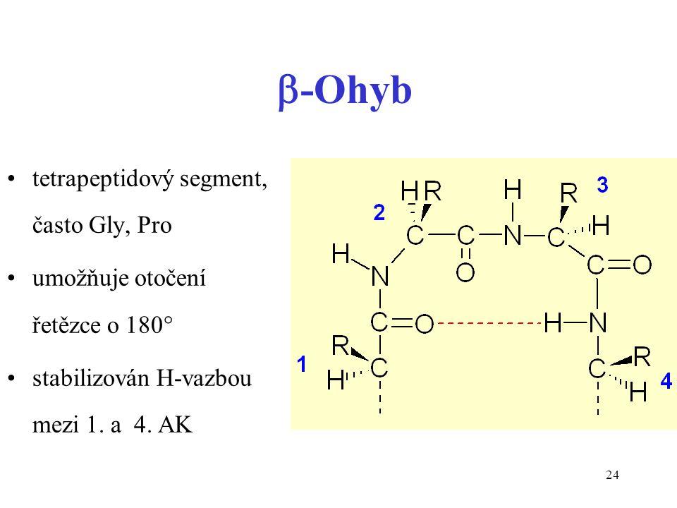 24  -Ohyb tetrapeptidový segment, často Gly, Pro umožňuje otočení řetězce o 180° stabilizován H-vazbou mezi 1. a 4. AK