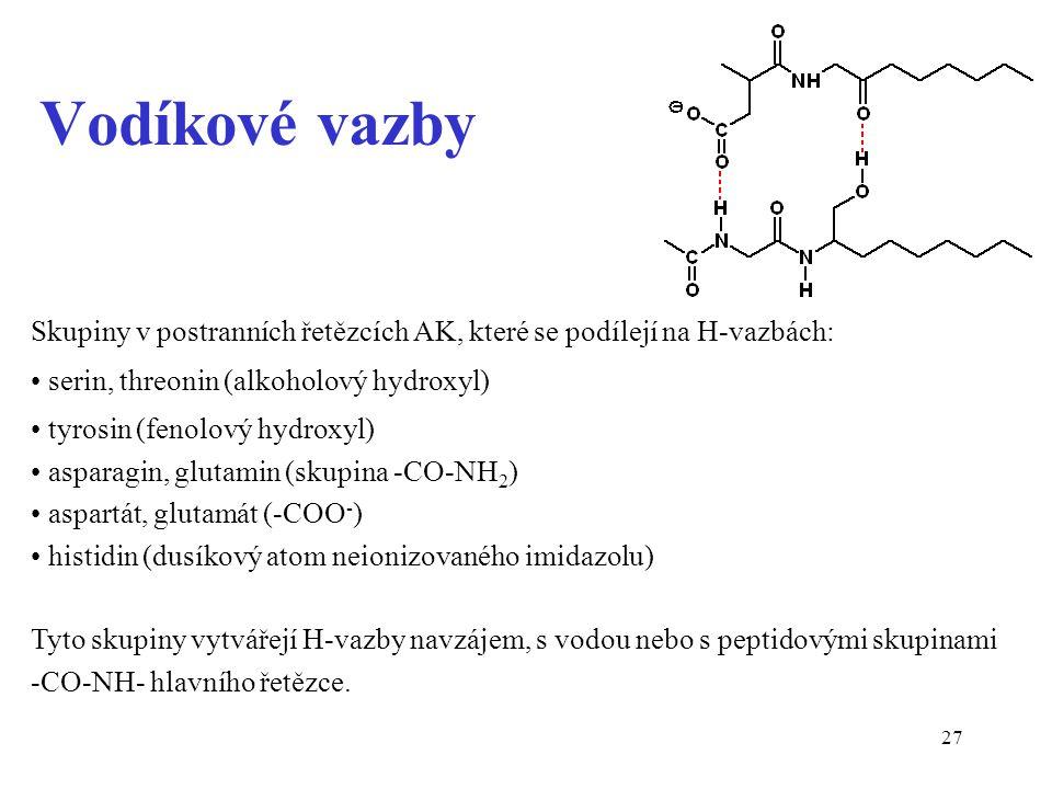 27 Vodíkové vazby Skupiny v postranních řetězcích AK, které se podílejí na H-vazbách: serin, threonin (alkoholový hydroxyl) tyrosin (fenolový hydroxyl