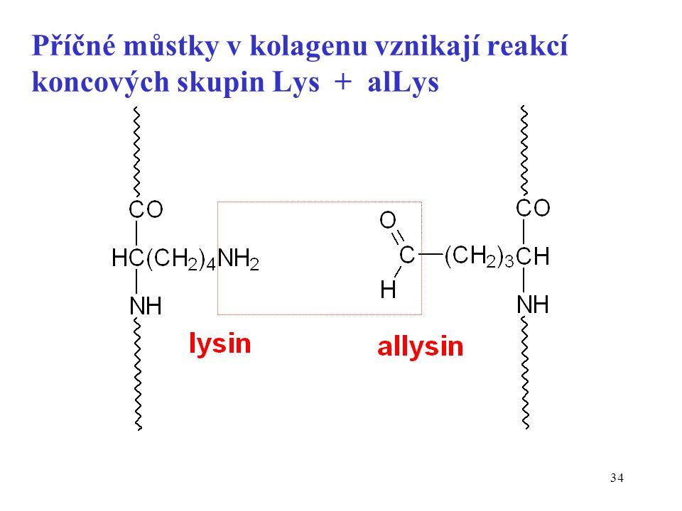 34 Příčné můstky v kolagenu vznikají reakcí koncových skupin Lys + alLys
