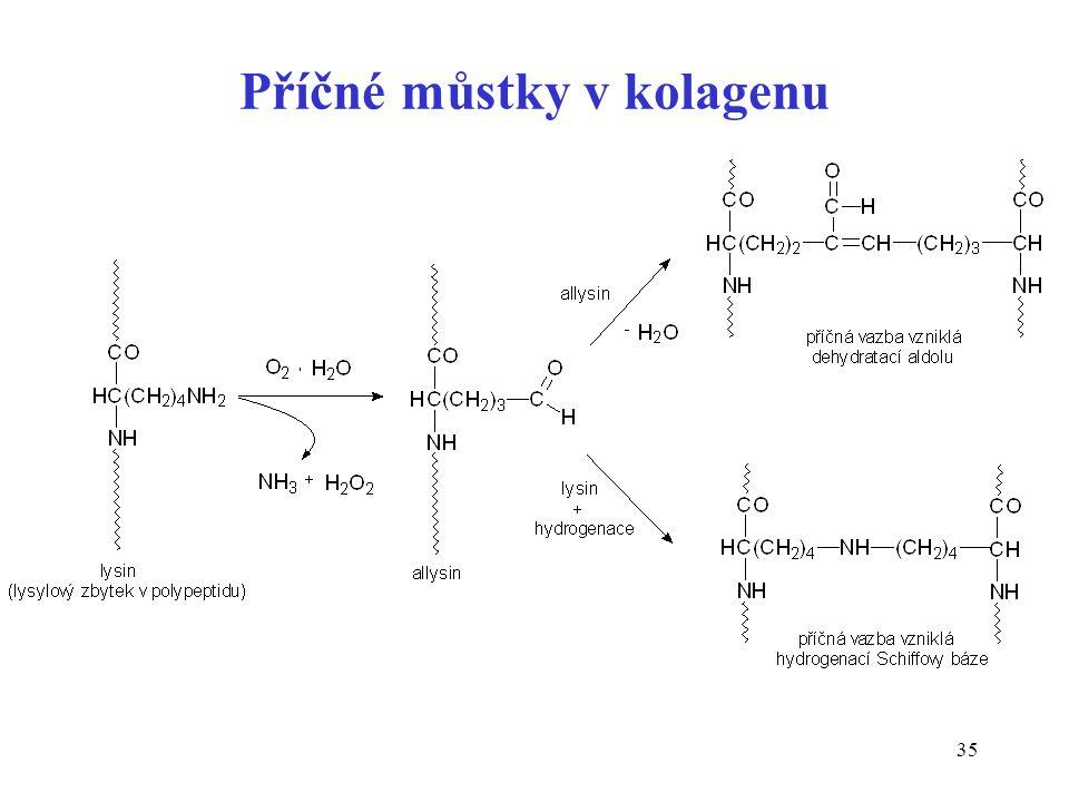 35 Příčné můstky v kolagenu