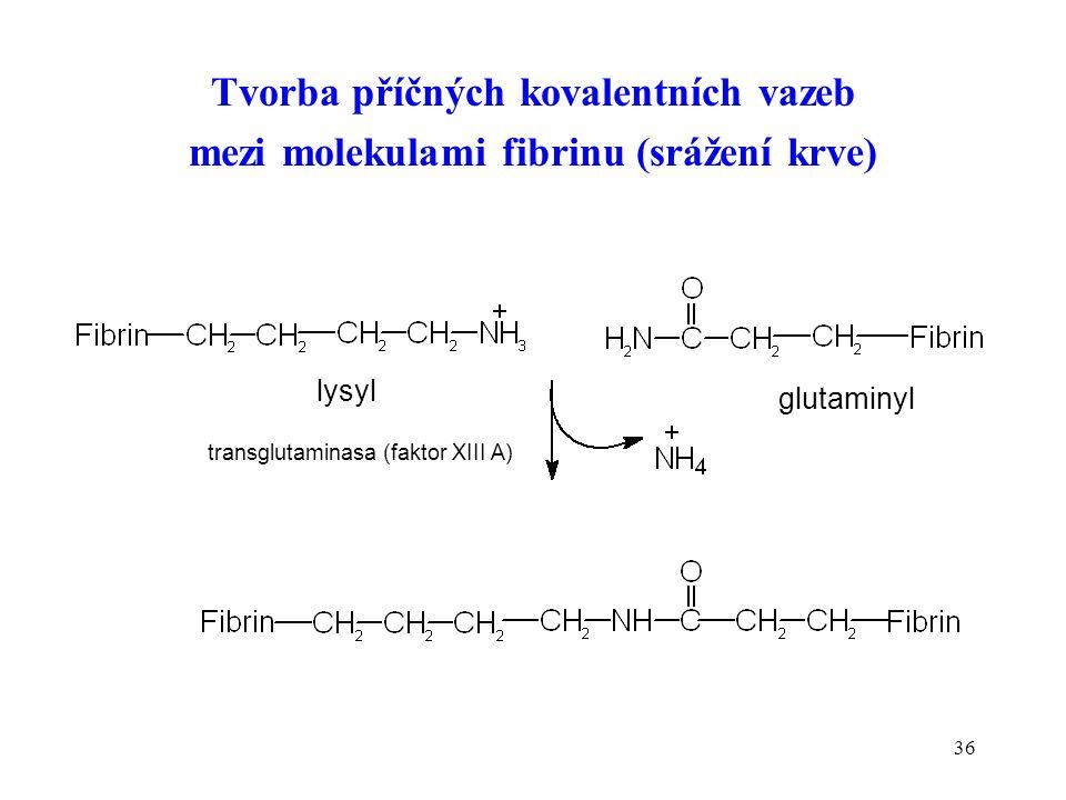 36 Tvorba příčných kovalentních vazeb mezi molekulami fibrinu (srážení krve) lysyl glutaminyl transglutaminasa (faktor XIII A)