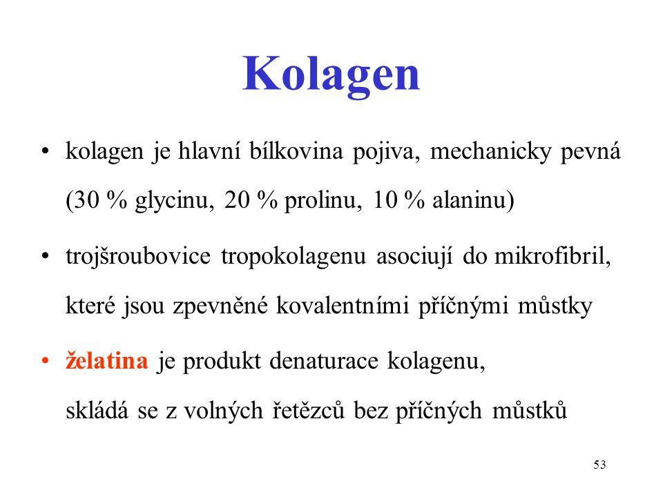 53 Kolagen kolagen je hlavní bílkovina pojiva, mechanicky pevná (30 % glycinu, 20 % prolinu, 10 % alaninu) trojšroubovice tropokolagenu asociují do mi