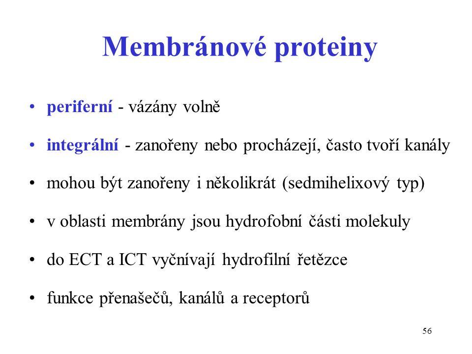 56 Membránové proteiny periferní - vázány volně integrální - zanořeny nebo procházejí, často tvoří kanály mohou být zanořeny i několikrát (sedmihelixo