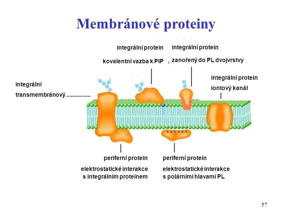 57 Membránové proteiny integrální transmembránový................ integrální protein kovalentní vazba k PIP integrální protein zanořený do PL dvojvrst