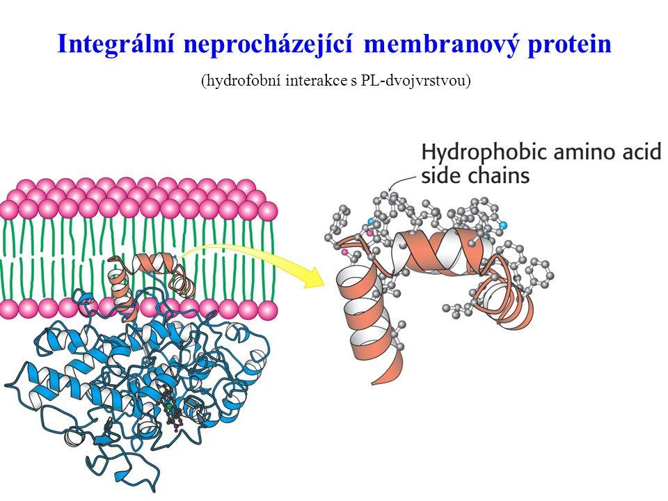 58 Integrální neprocházející membranový protein (hydrofobní interakce s PL-dvojvrstvou)