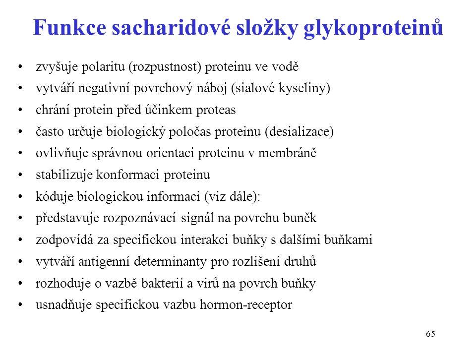 65 Funkce sacharidové složky glykoproteinů zvyšuje polaritu (rozpustnost) proteinu ve vodě vytváří negativní povrchový náboj (sialové kyseliny) chrání