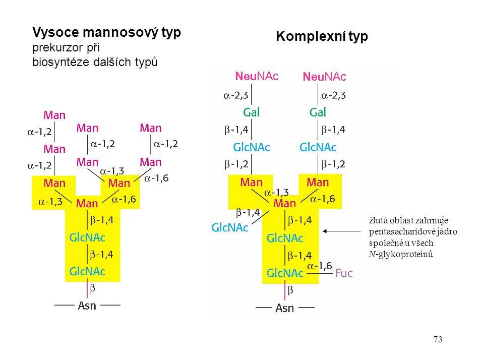 73 žlutá oblast zahrnuje pentasacharidové jádro společné u všech N-glykoproteinů Komplexní typ Vysoce mannosový typ prekurzor při biosyntéze dalších t