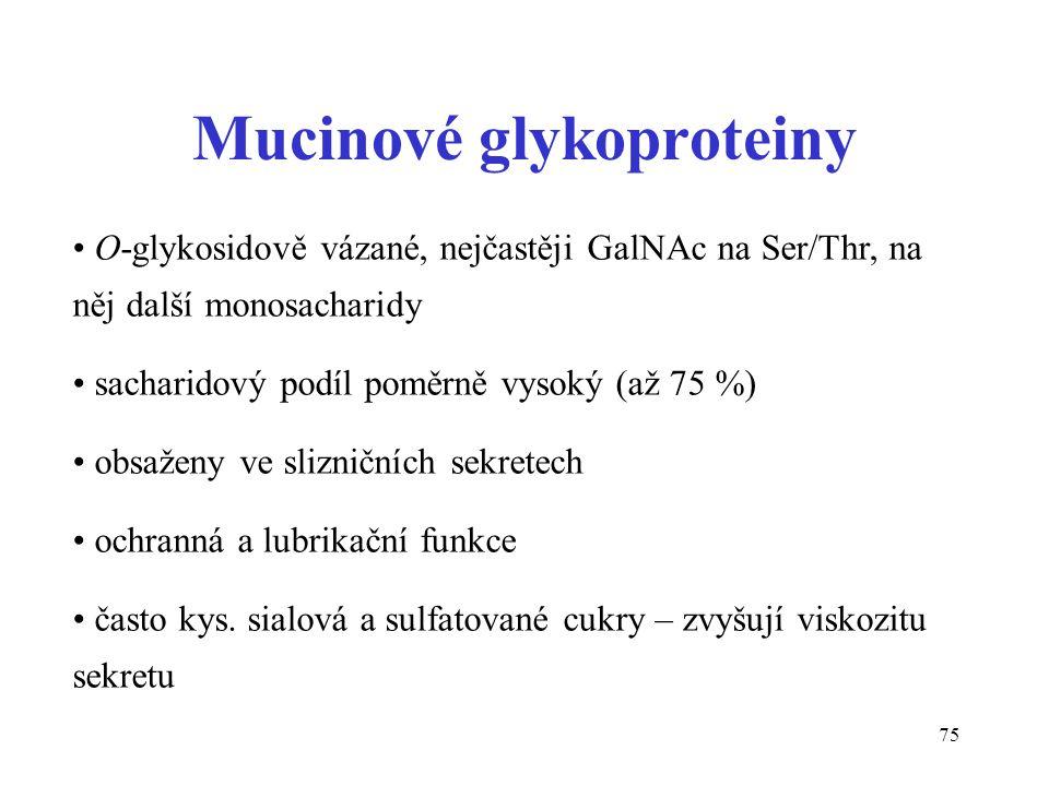75 O-glykosidově vázané, nejčastěji GalNAc na Ser/Thr, na něj další monosacharidy sacharidový podíl poměrně vysoký (až 75 %) obsaženy ve slizničních s