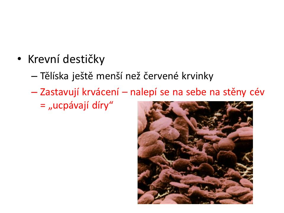 """Krevní destičky – Tělíska ještě menší než červené krvinky – Zastavují krvácení – nalepí se na sebe na stěny cév = """"ucpávají díry"""""""