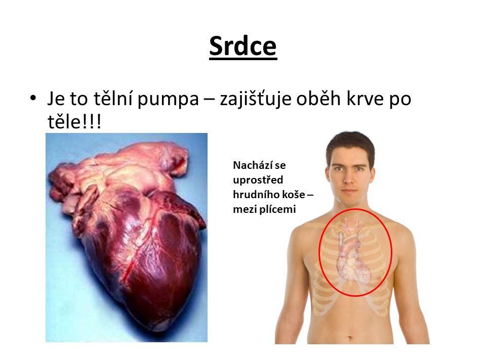 Srdce Je to tělní pumpa – zajišťuje oběh krve po těle!!! Nachází se uprostřed hrudního koše – mezi plícemi