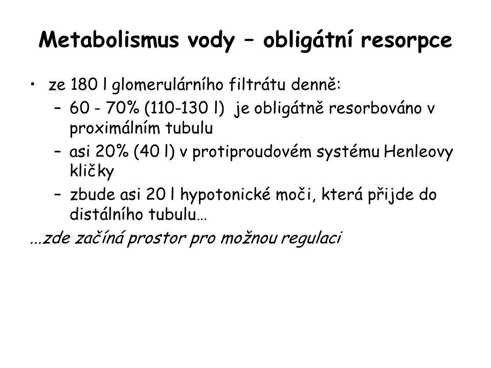 Regulace objemu a osmolarity definitivní moči …do distálního tubulu přichází denně asi 20 - 30 l hypotonického filtrátu aldosteron - resorpce Na + a vylučování K + ADH - propustnost sběracího kanálku pro vodu definitivní moč: objem: 0,5 - 2 l/den, izovolemieosmolarita: 100 - 1400 mosm/l, dle potřeb organismu tak, aby se udržela izovolemie