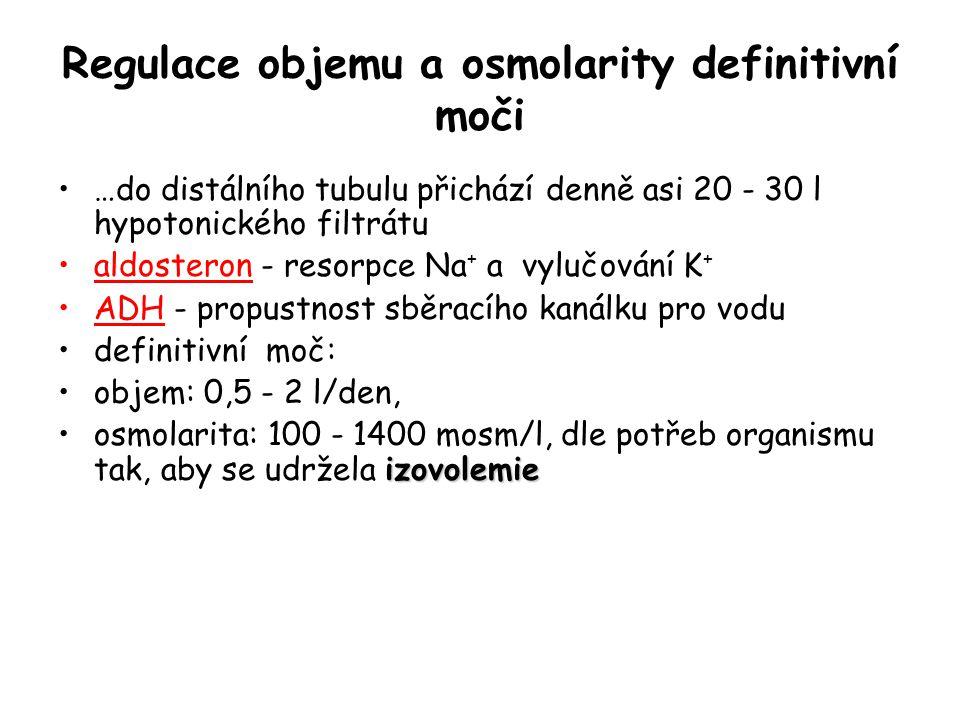 Regulace objemu a osmolarity definitivní moči …do distálního tubulu přichází denně asi 20 - 30 l hypotonického filtrátu aldosteron - resorpce Na + a v