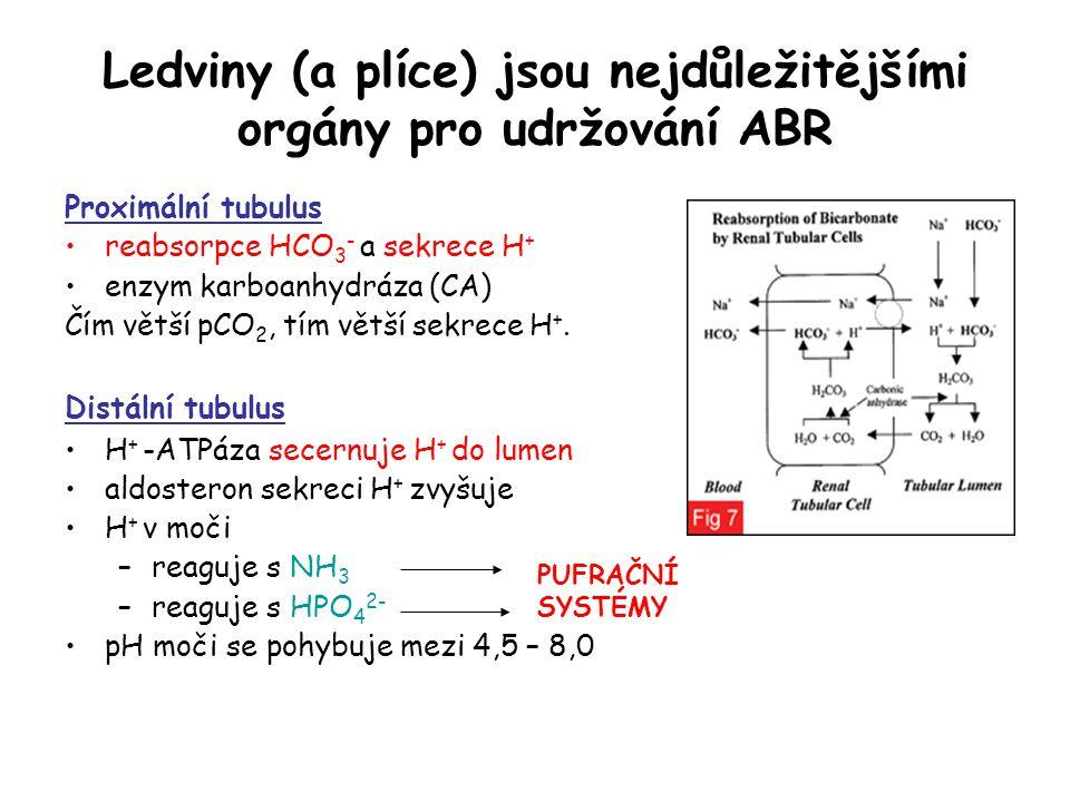 Ledviny (a plíce) jsou nejdůležitějšími orgány pro udržování ABR Proximální tubulus reabsorpce HCO 3 - a sekrece H + enzym karboanhydráza (CA) Čím vět