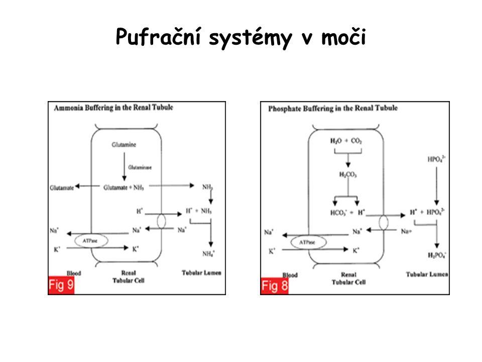 Vylučování dusíkatých katabolitů Močovina (urea) je syntetizována v játrech –pasivně prochází membránami –má svou roli v protiproudovém systému Amoniak vzniká z Gln, má pufrační funkci v moči Kreatinin vzniká ve svalech, není ani resorbován ani secernován tubuly, používá se proto k vypočtení GF (kreatininová clearance) Kyselina močová je produktem degradace purinů kyselina močová kreatinin