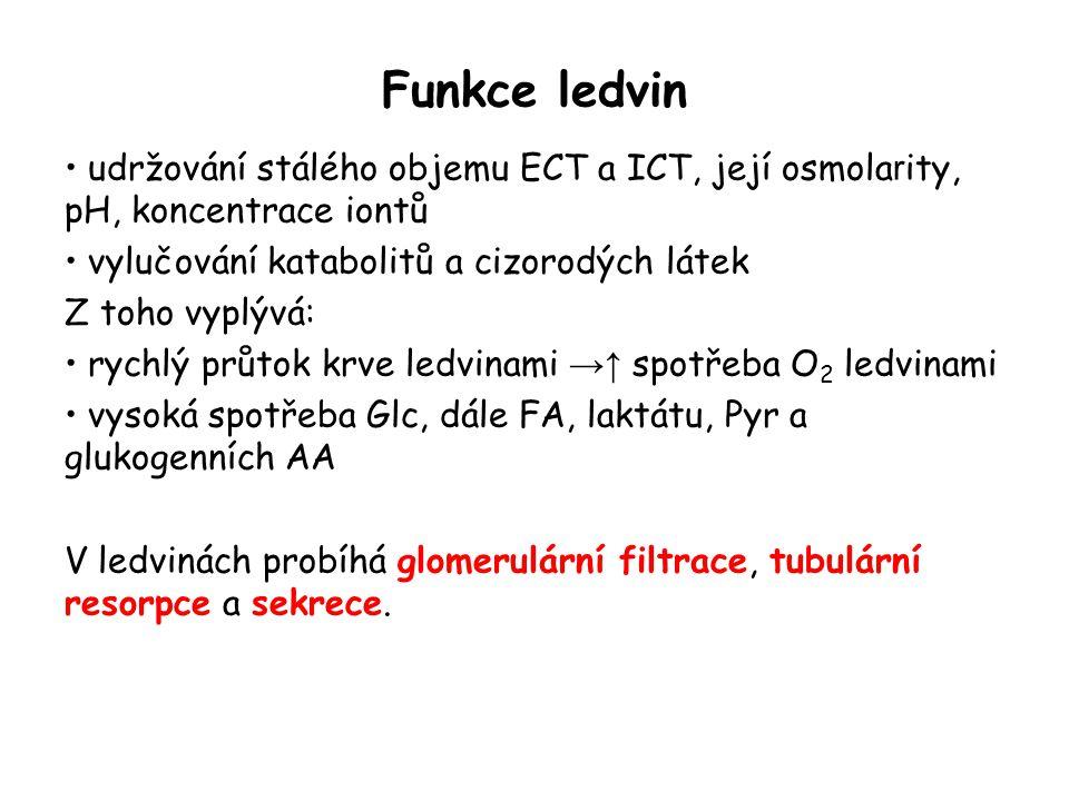 Nefron jako funkční jednotka v ledvině Obrázek byl převzat z http://en.wikipedia.org/wiki/Renal_tubule#Renal_tubule