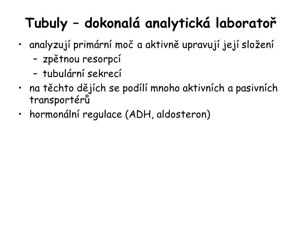 Tubuly – dokonalá analytická laboratoř analyzují primární moč a aktivně upravují její složení –zpětnou resorpcí –tubulární sekrecí na těchto dějích se
