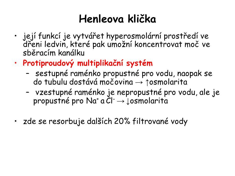 Henleova klička její funkcí je vytvářet hyperosmolární prostředí ve dřeni ledvin, které pak umožní koncentrovat moč ve sběracím kanálku Protiproudový