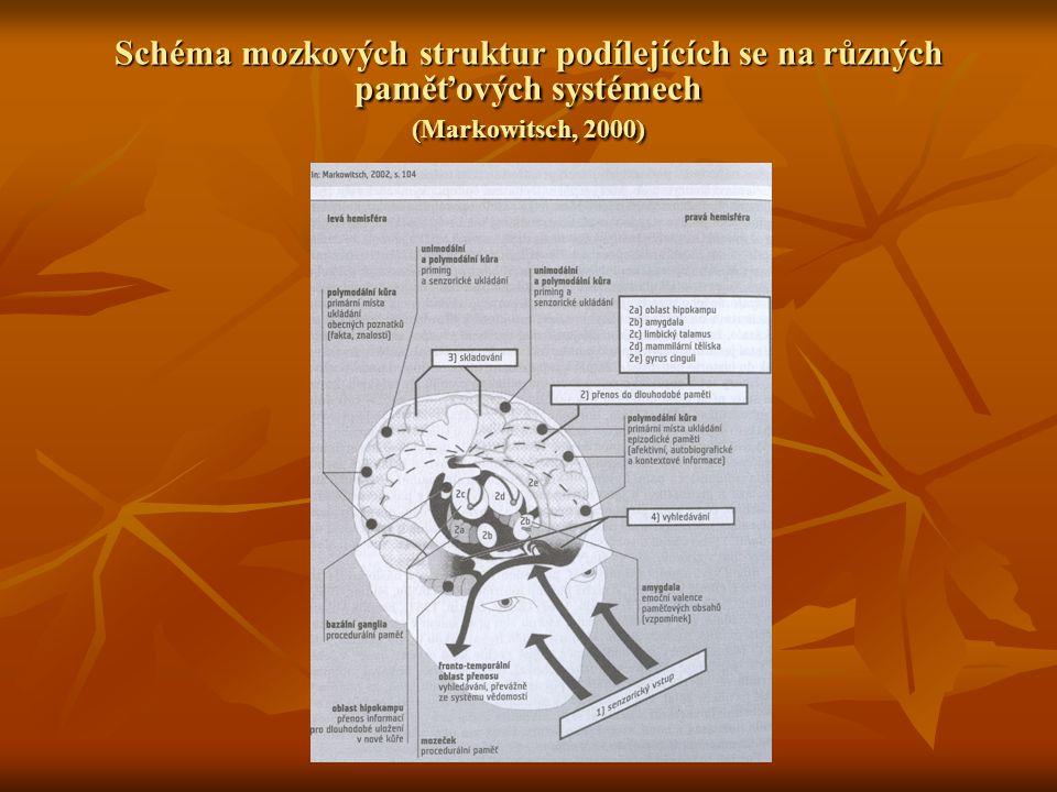 Schéma mozkových struktur podílejících se na různých paměťových systémech (Markowitsch, 2000)