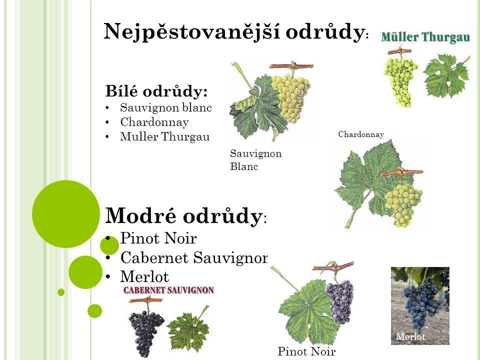 Bílé odrůdy: Sauvignon blanc Chardonnay Muller Thurgau Modré odrůdy : Pinot Noir Cabernet Sauvignon Merlot Nejpěstovanější odrůdy : Chardonnay Merlot Pinot Noir Sauvignon Blanc