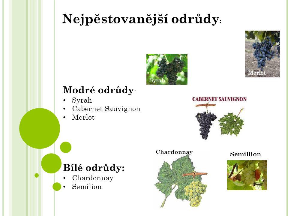 Modré odrůdy : Syrah Cabernet Sauvignon Merlot Bílé odrůdy: Chardonnay Semilion Nejpěstovanější odrůdy : Chardonnay Merlot Syrah Semillion