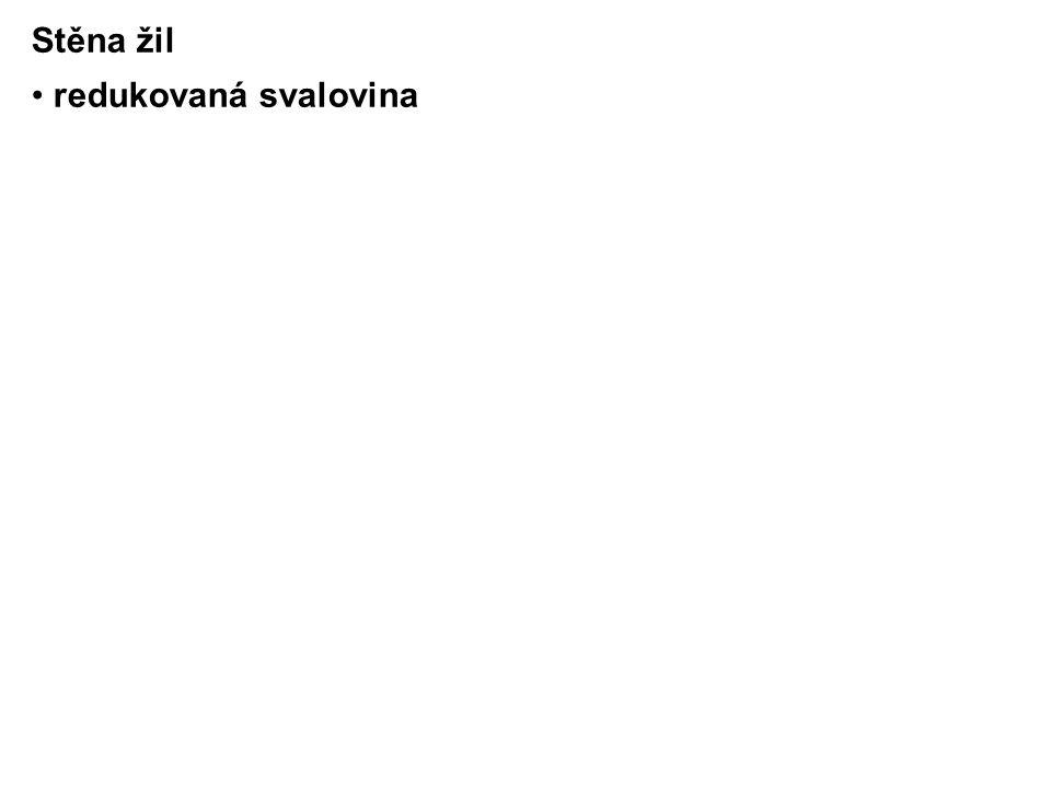 Lymfatické systém hrudníku 1.Hrudní stěny: povrchový → nodi axillares na vnitřní stěně hrudníku → nodi parasternales et intercostales 2.