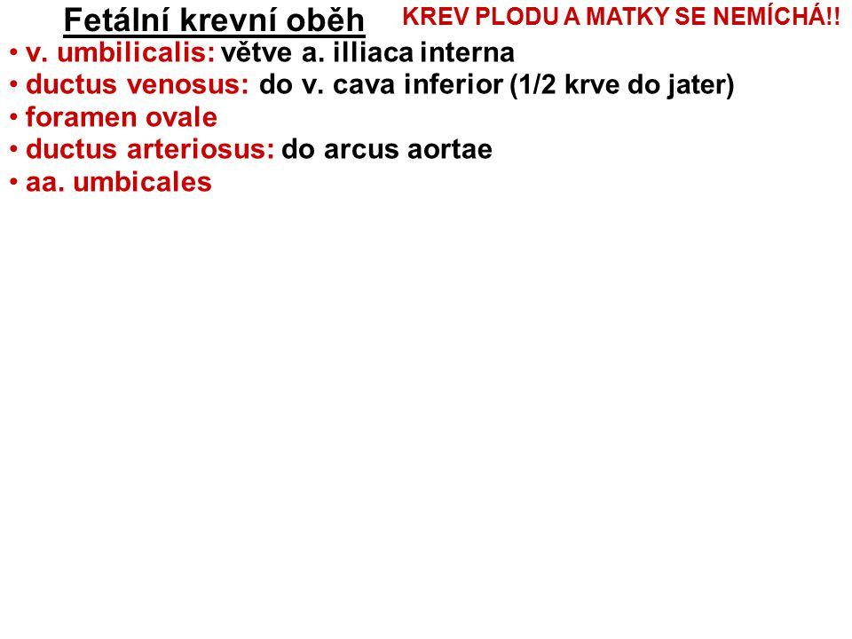 Fetální krevní oběh v.umbilicalis: větve a. illiaca interna ductus venosus: do v.