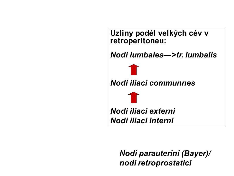 Uzliny podél velkých cév v retroperitoneu: Nodi lumbales—>tr. lumbalis Nodi iliaci communnes Nodi iliaci externi Nodi iliaci interni Nodi parauterini