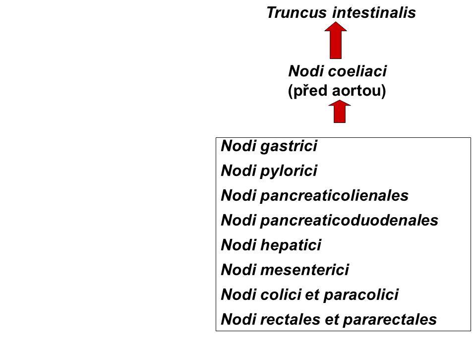 Nodi gastrici Nodi pylorici Nodi pancreaticolienales Nodi pancreaticoduodenales Nodi hepatici Nodi mesenterici Nodi colici et paracolici Nodi rectales