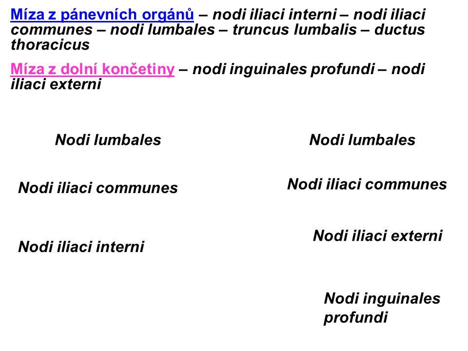 Nodi lumbales Nodi iliaci externi Nodi inguinales profundi Míza z pánevních orgánů – nodi iliaci interni – nodi iliaci communes – nodi lumbales – trun